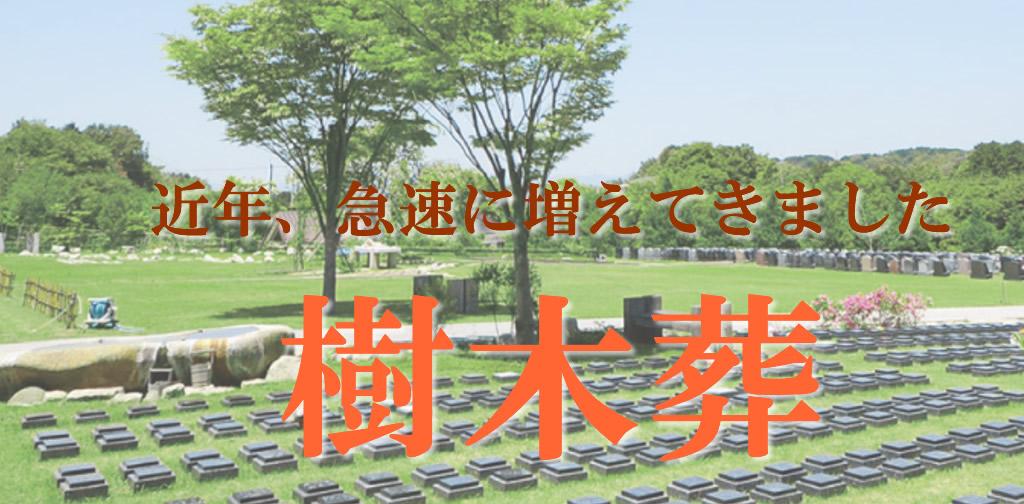 葬送の中でも、急激に増えたのが樹木葬